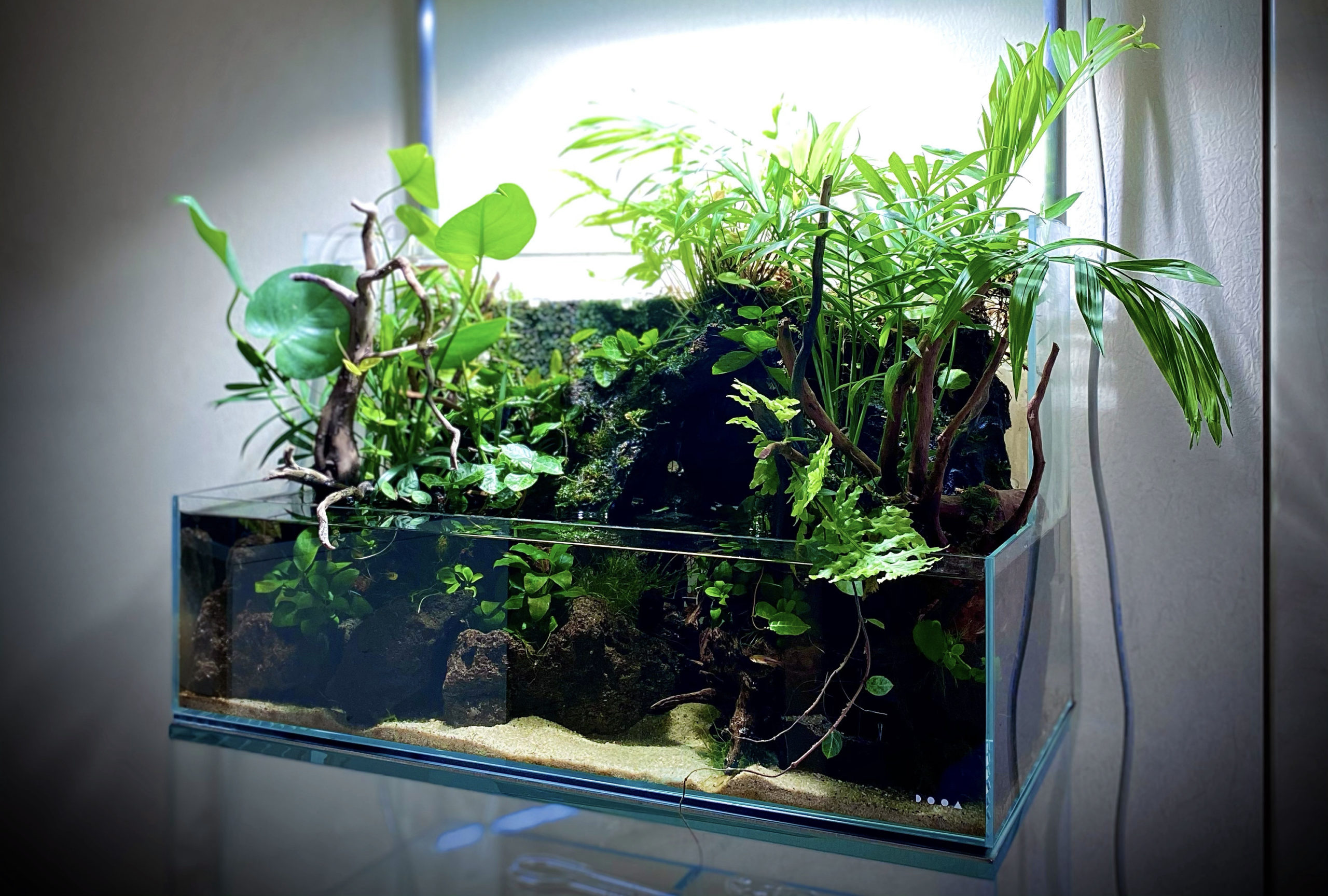 Virtual Aquascape Gallery No. 1  Full ADA & DOOA Aquaterrarium
