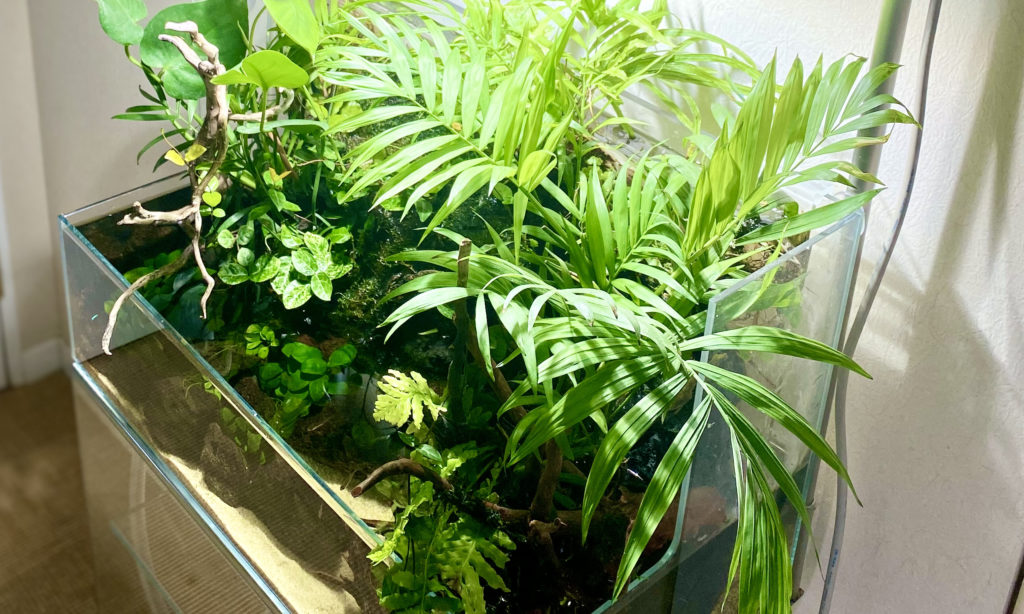 3 Tips To Maintain Your Aqua Terrarium For Years Read This Before You Create One Rin S Sweet Room Aquascaping Interior Design