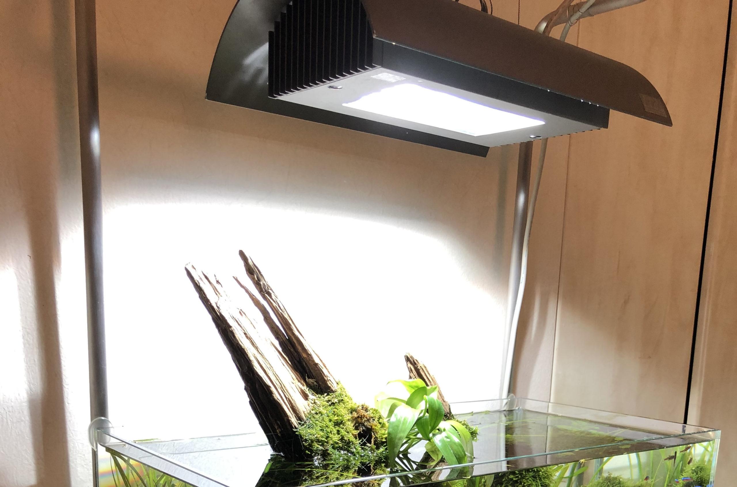 Should You Still Buy Metal Halide Lamp for Your Aquarium in 2021?