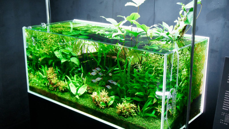 How to Create an Aquascape