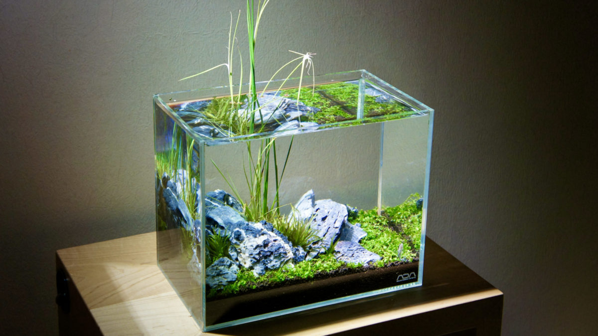 3 Reasons to Buy ADA Cube Garden