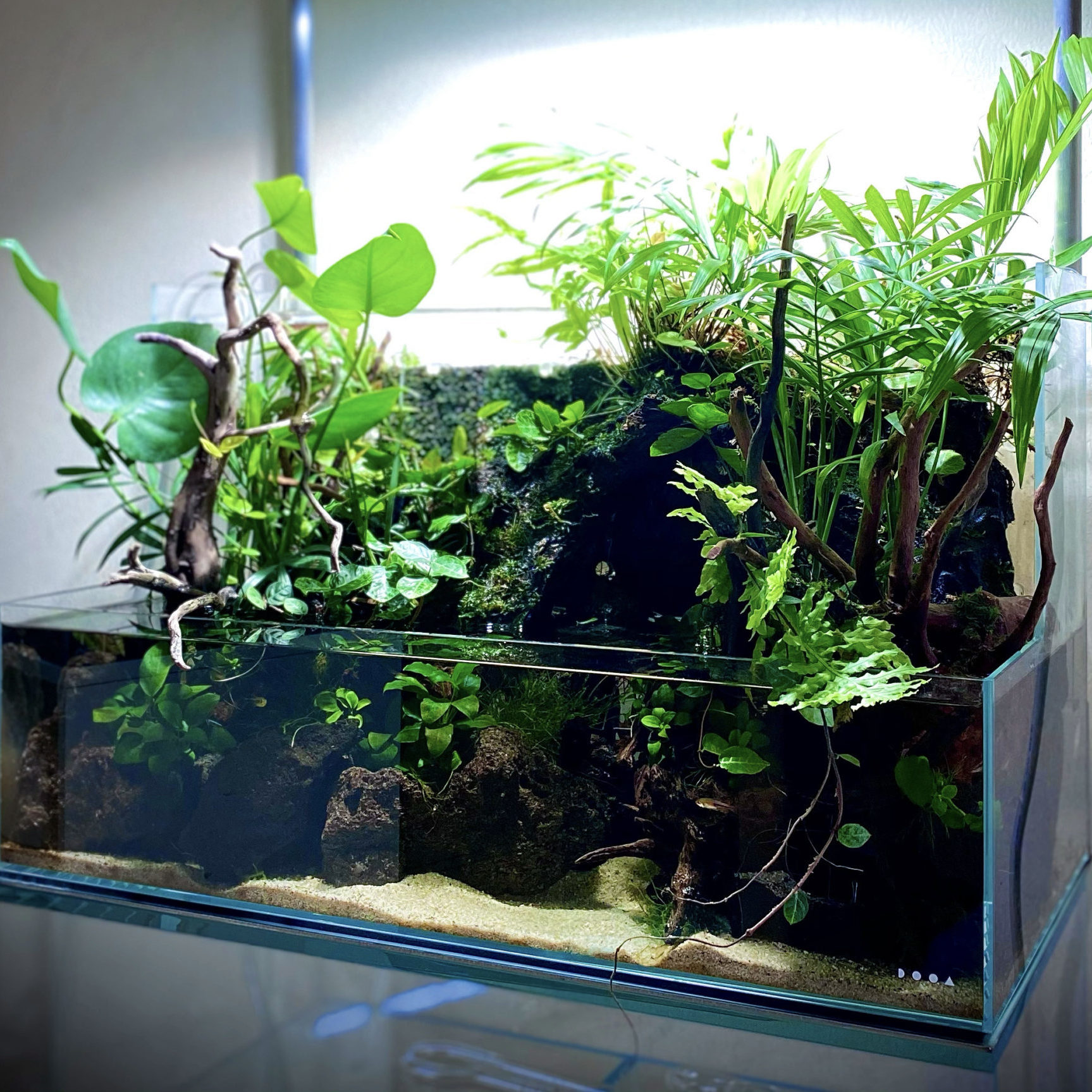 3 Tips to Maintain Your Aqua Terrarium for Years; Read this Before You Create One!