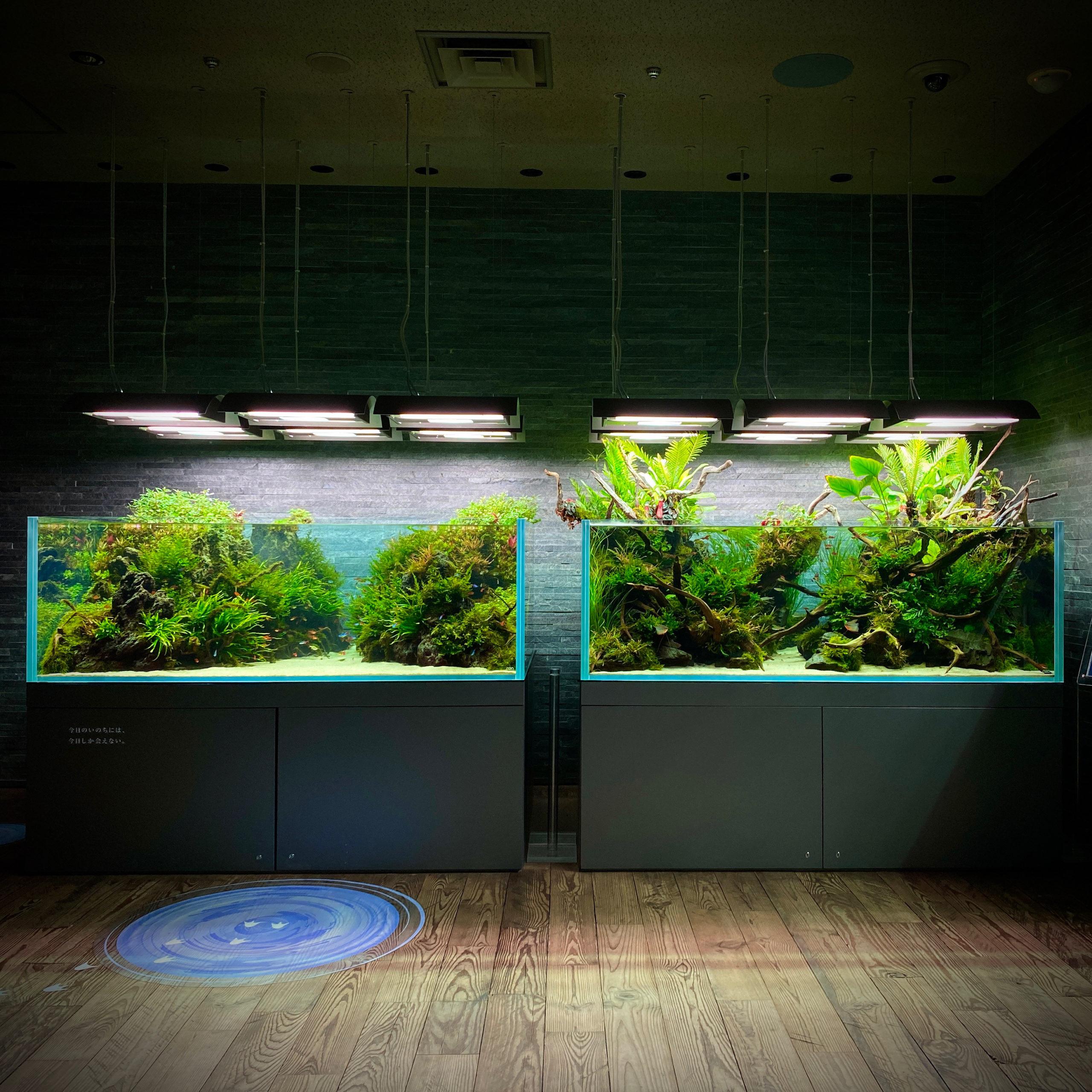 How to Visit Sumida Aquarium Tokyo in 2021!