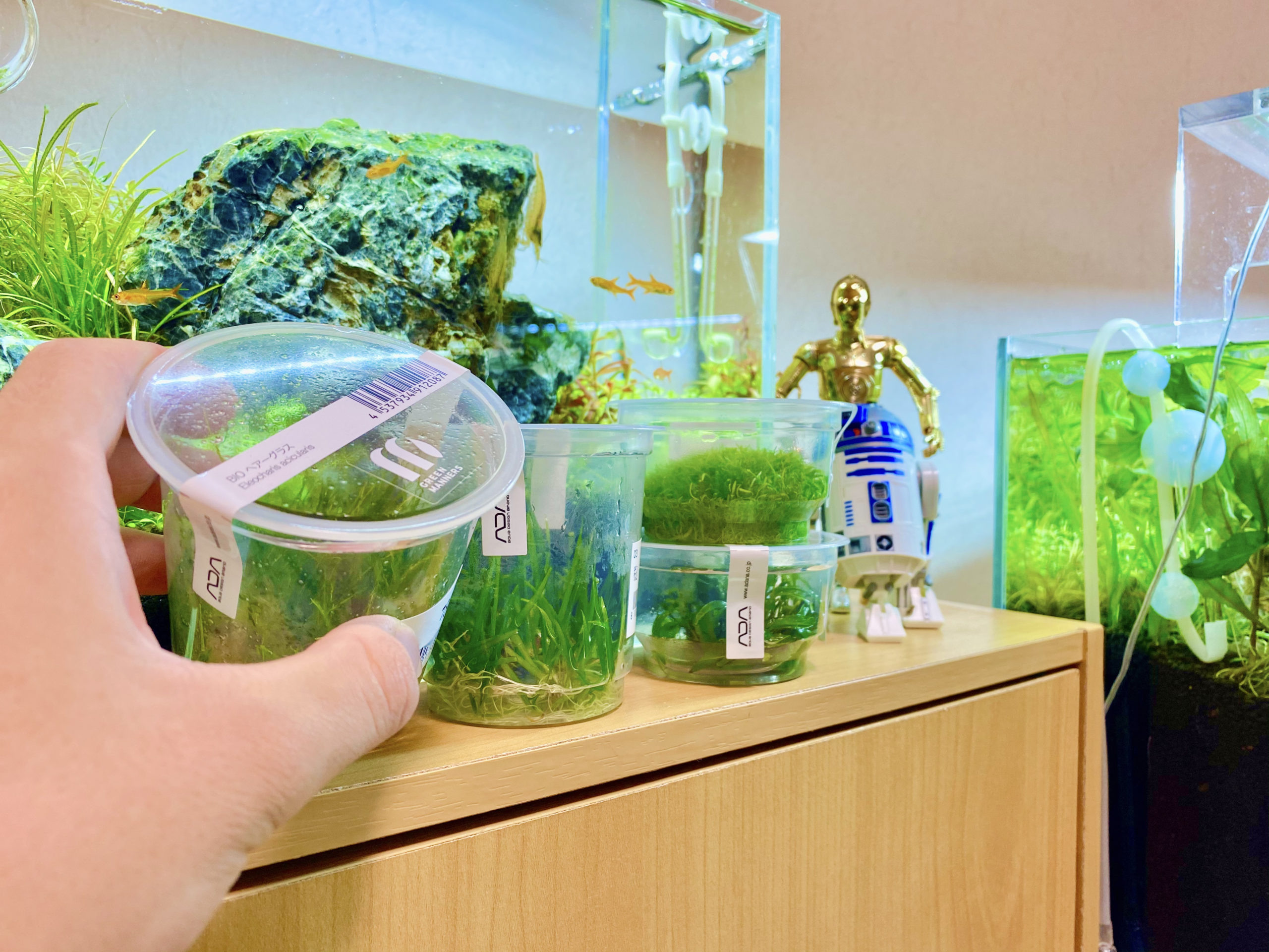 Everything You Need to Know About Tissue Culture Aquatic Plants